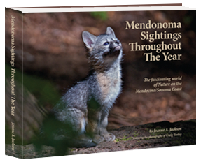 Mendonoma_Sightings_Throughout_The_Year_cover