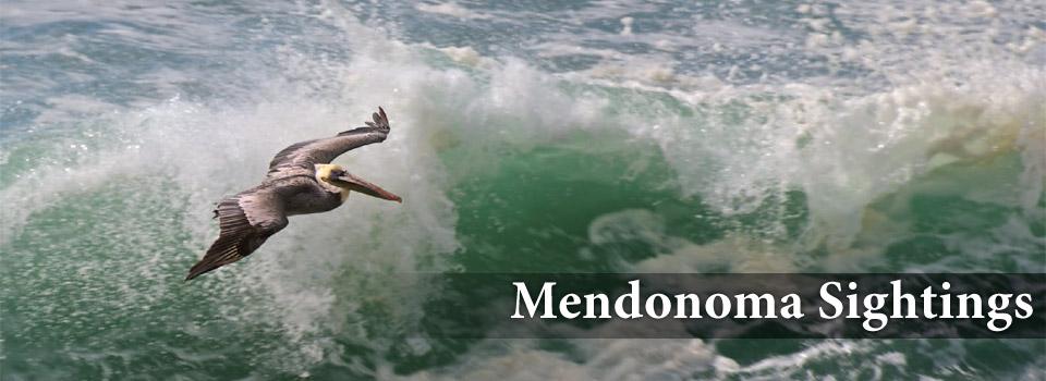Mendonoma Sightings