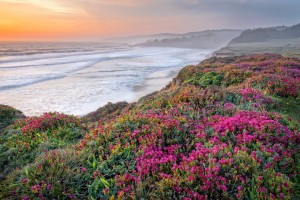Wildflowers at The Sea Ranch by Paul Kozal