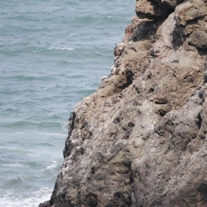Pelagic Cormorant nest at Hearn Gulch by Jeanne Jackson (Large)