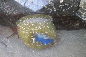 An anemonee & sailor 3 by Robert Chan