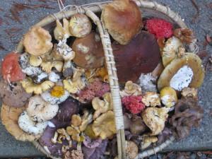 A bounty of wild mushrooms by Subir Sanyal