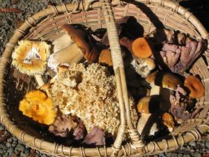 A haul of edible mushrooms by Subir Sanyal