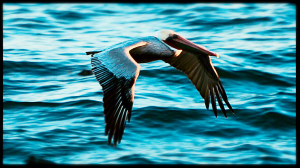 An adult Brown Pelican by Peter Cracknell
