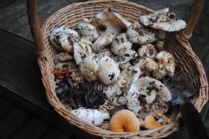 Basket of edible mushrooms by Jeanne Jackson