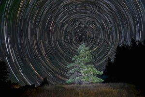 Merry Christmas tree and stars by Paul Kozal