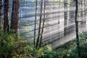 Sunbeams in the forest by Allen Vinson