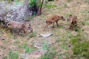 Triplet fawns by Tom Eckles