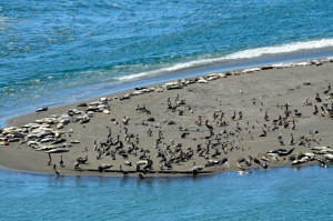 The beach at Jenner is crowded by Rozann Grunig