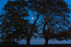 Harvest moon, Blood moon, Eclipse by Paul Kozal