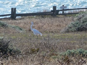 Great Egret headed towards a Great Blue Heron by Carolyn André