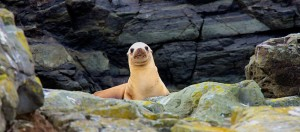 What is this Sea Lion thinking by Allen Vinson