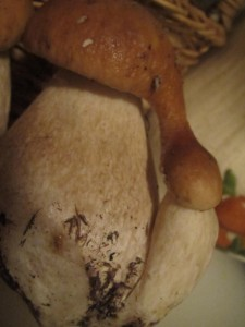 Unusual joining of Boletus edulis by Irma Brandt