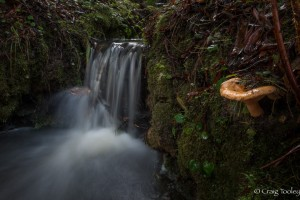 A rare sighting - a waterfall by Craig Tooley