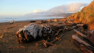 Storm tossed driftwood at Manchester Beach by Anne Mary Schaefer (Large)