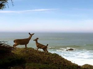 Two Deer on the bluff by Beth Kattleman