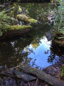 A pond in the forest reflects the sky by Shirley Mitchell