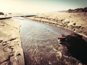 Bear enjoys the creek at Walk On Beach by Beth Kattleman