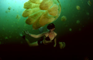 Diving in Jellyfish by Ken Bailey