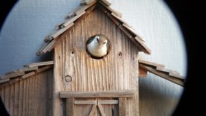 Violet-green Swallow in a nesting box by Mel Smith (1024x576)