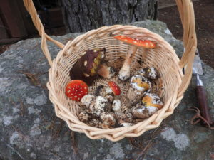 a-basket-of-mushrooms-by-jeanne-jackson