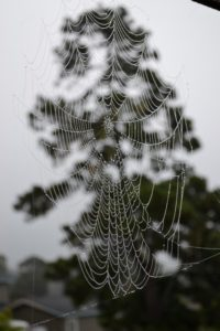 spider-web-jewels-by-don-spear