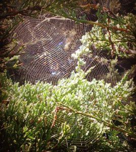 spider-webs-by-beth-kattleman