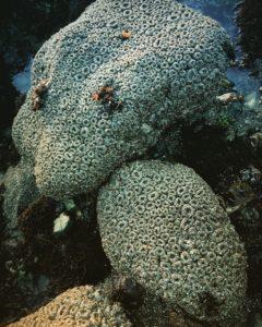 aggregating-anemones-anthopleura-elegantissima-by-beth-kattleman-819x1024